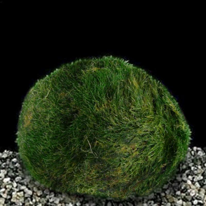 3Pcs-Aquarium-Landscape-Marimo-Live-Moss-Balls-Algae-Fish-Tank-Ornaments-Decor